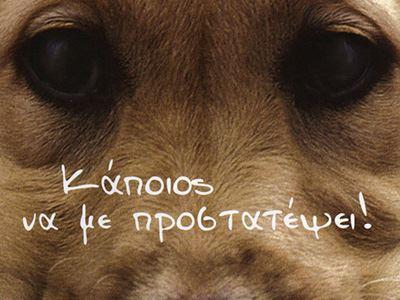 Συγκλονίζει το γράμμα Φινλανδής για τις κακοποιήσεις ζώων στην Κρήτη...