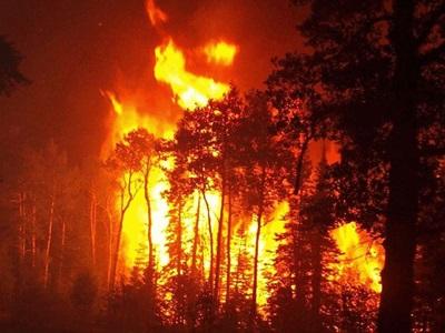 Λιγότερες, αλλά πιο καταστροφικές πλέον οι δασικές πυρκαγιές