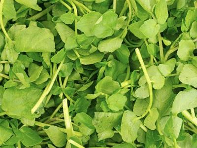 Είναι το πιο υγιεινό λαχανικό στον κόσμο και δεν το τρώει κανείς