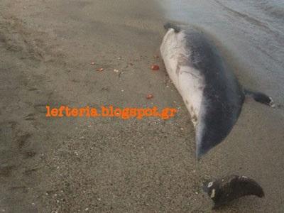 Νεκρό δελφίνι στην παραλία της Κατερίνης