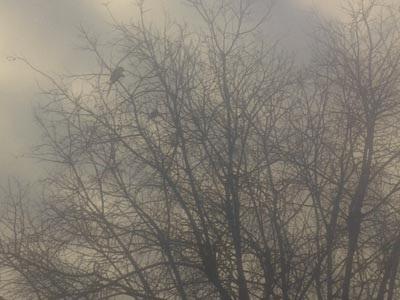 Θεσσαλονίκη: Μεγάλοι πράσινοι παπαγάλοι έχουν κάνει... στέκι τους ένα πάρκο