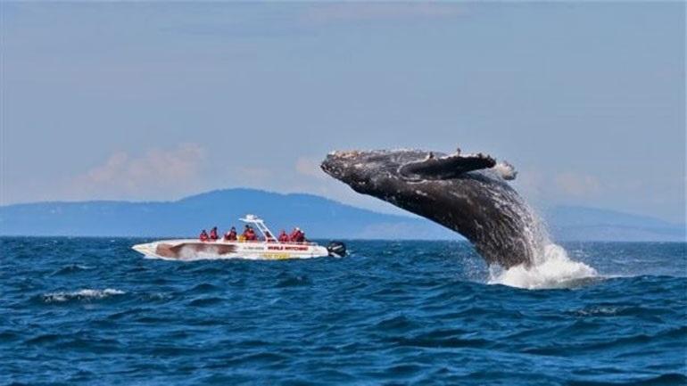 Μεξικό: Καναδή τουρίστρια σκοτώθηκε όταν φάλαινα έπεσε πάνω στο σκάφος που επέβαινε