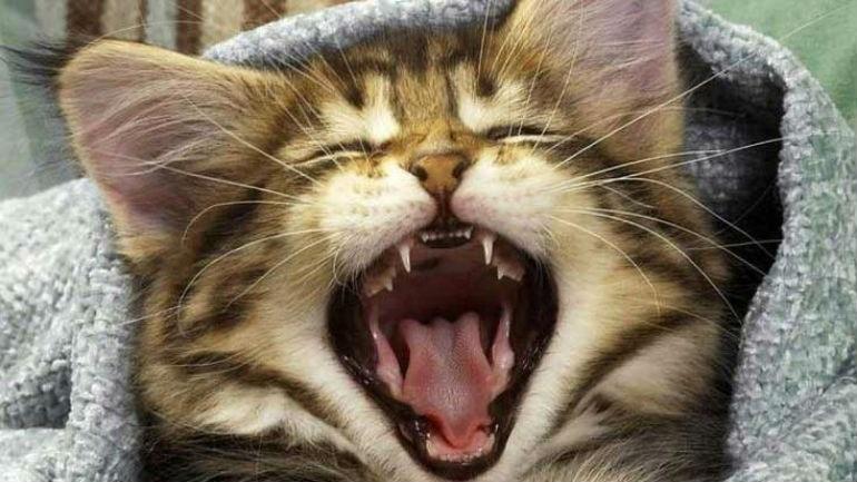 23b240987a7c Τρίκαλα  Οι γάτες την έστειλαν στο νοσοκομείο