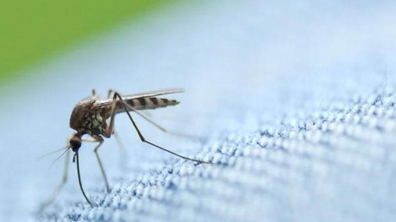 Κεντρική Μακεδονία: Ολοκληρώνονται οι αεροψεκασμοί κατά των κουνουπιών