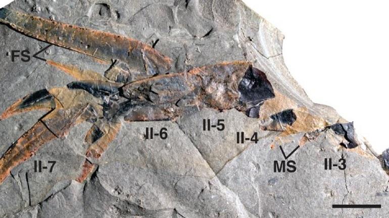 Ανακαλύφθηκε γιγάντιος θαλάσσιος σκορπιός με... αρχαιοελληνικό όνομα