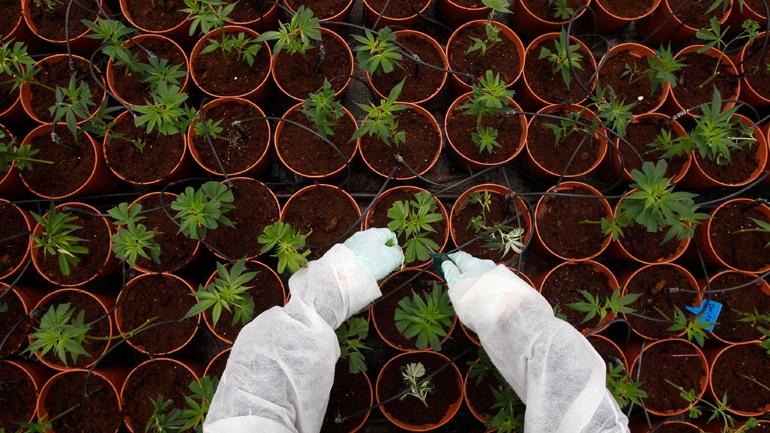 Τα πρώτα χάπια ιατρικής μαριχουάνας στην αγορά