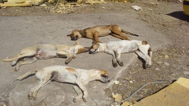 Αποτέλεσμα εικόνας για Νεκρά ζώα