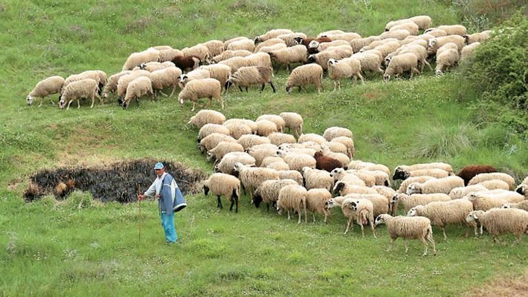 ΕΛΓΑ: Αποζημιώσεις σε κτηνοτρόφους για ζημιές στο ζωικό κεφάλαιο