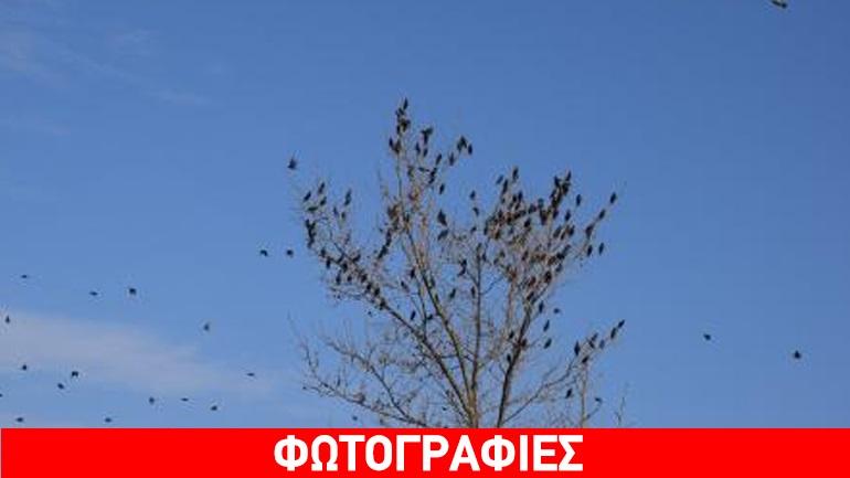 Φωτογραφίες πουλί