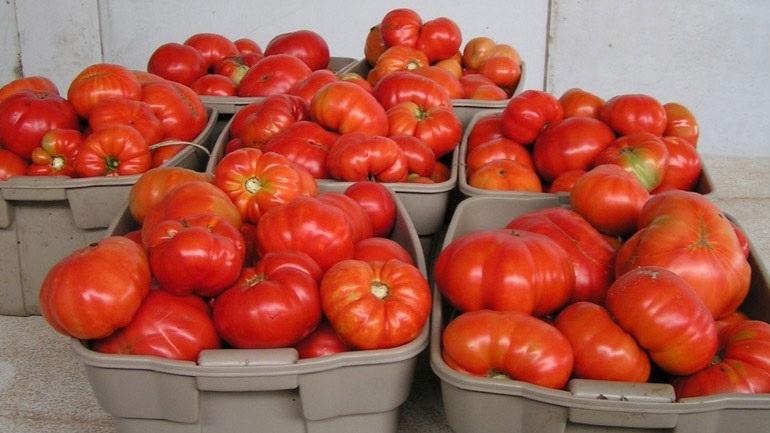 Νέα δέσμευση 20 τόνων ντομάτας Πολωνίας χωρίς σήμανση