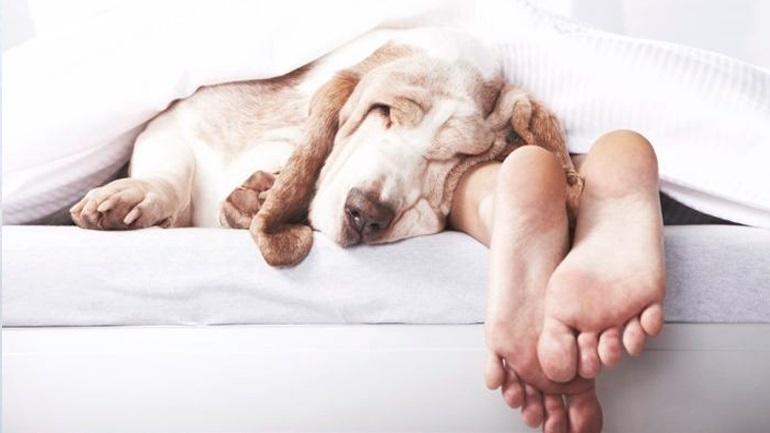 14879441484b Να αφήνω τον σκύλο μου να κοιμάται μαζί μου στο κρεβάτι