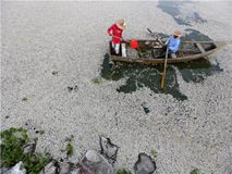 Μεξικό: 48 τόνοι ψαριών βρέθηκαν νεκρά σε λίμνη