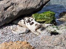 Ξεβράστηκε αγελάδα σε παραλία στην Ιεράπετρα