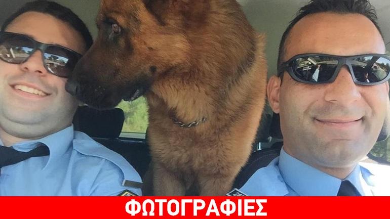 Κρήτη: Στο περιπολικό ο σκύλος που βρέθηκε να περιφέρεται στην εθνική οδό