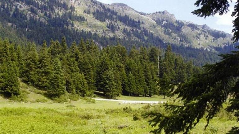 Ιερά μονή διεκδικεί 17.000 στρέμματα δάσους από το Δημόσιο