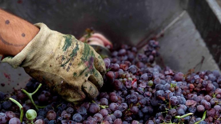 Οι οινοπαραγωγοί ζητούν την κατάργηση του ειδικού φόρου κατανάλωσης στο κρασί