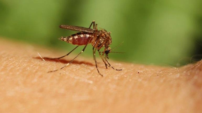 Περιστατικό λοίμωξης από τον ιό του Δυτικού Νείλου στην Αργολίδα