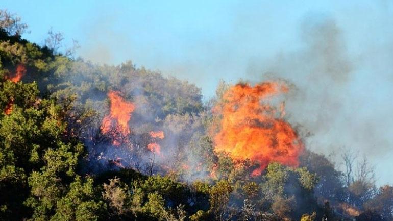 Πυρκαγιά σε αγροτοδασική έκταση στη Μεσσηνία