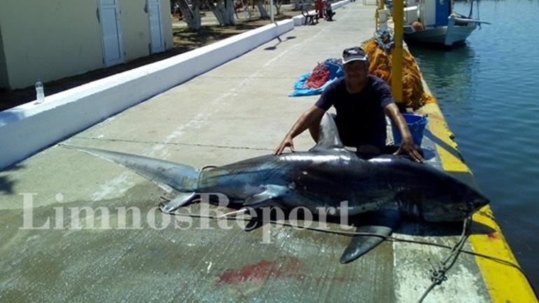Έπιασαν καρχαρία 200 κιλών στην περιοχή της Αγίας Ειρήνης στη Λήμνο