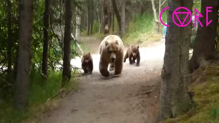 Πεζοπόρος αντιμετωπίζει μια αρκούδα γκρίζλι με τα μικρά της