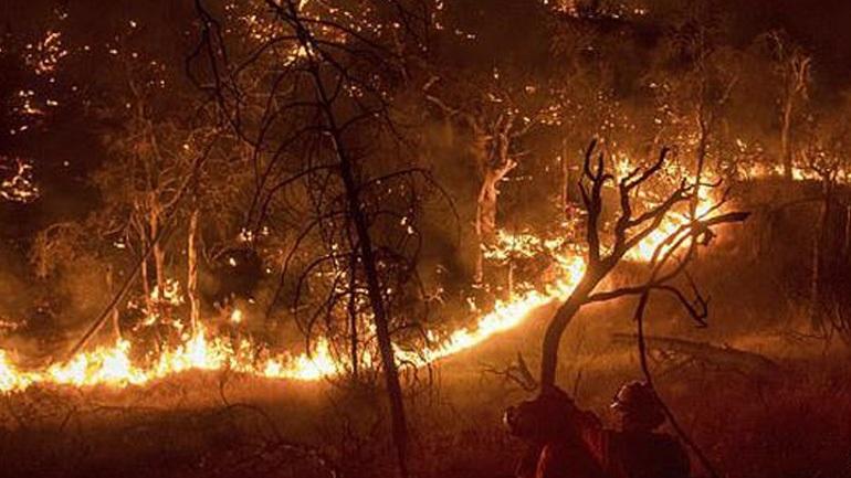 Εθελοντές πυροσβέστες έβαζαν φωτιές για να τις... σβήσουν