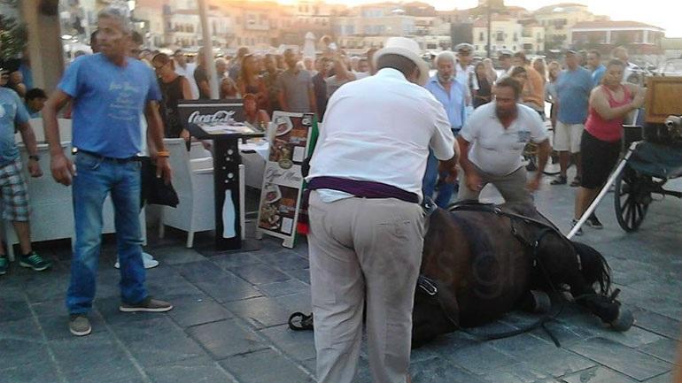 Άλογο κατέρρευσε στο παλιό λιμάνι των Χανίων... Πανικός στους τουρίστες!