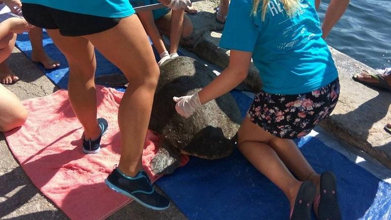 Διασώθηκε θαλάσσια χελώνα στο Αργοστόλι