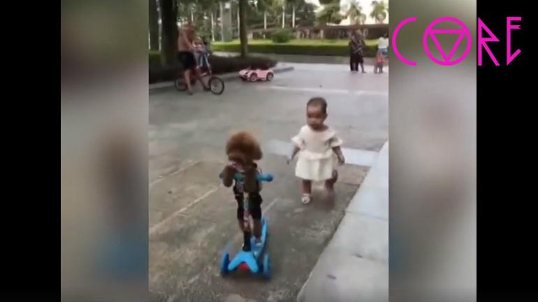 Κανίς κλέβει το πατίνι ενός μικρού παιδιού