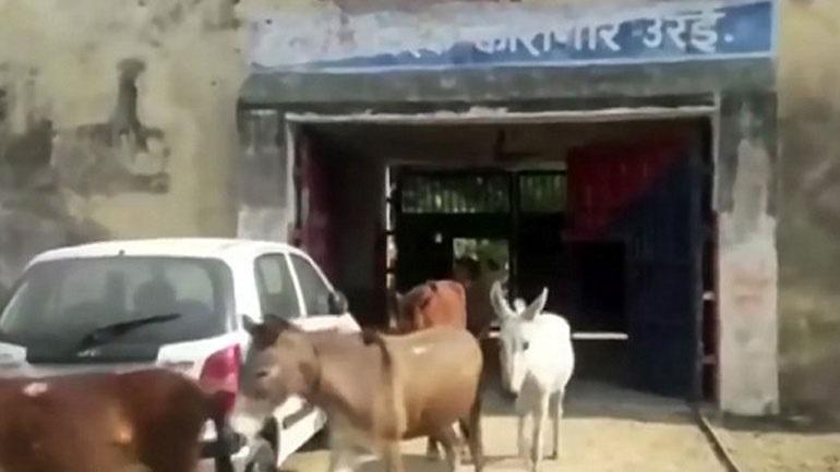 Ινδία: Της φυλακής τα σίδερα είναι για τα... γαϊδούρια