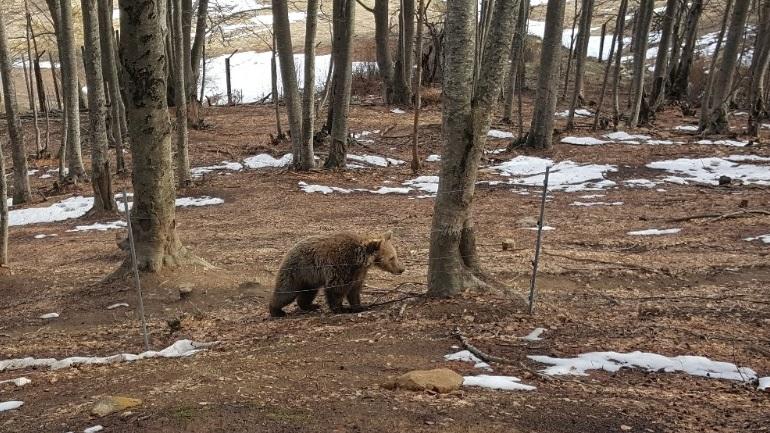 Ξύπνησαν οι αρκούδες στο καταφύγιο του Αρκτούρου!