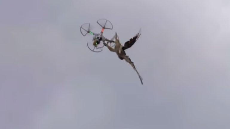 Αστυνομικός καταρρίπτει drones με το... γεράκι του! 2393151