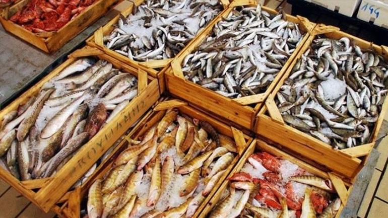 Δέσμευση αλιευμάτων βάρους 384 κιλών στο λιμάνι του Πειραιά 2395900
