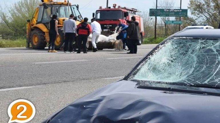 Άλογο συγκρούστηκε με αυτοκίνητα στην Ε.Ο. Ξάνθης - Κομοτηνής 2405194