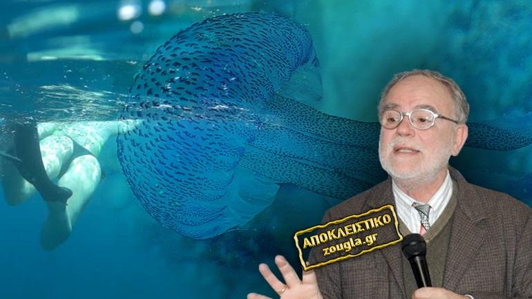 """Εφιαλτικό σενάριο: """"Οι μέδουσες θα αντικαταστήσουν τα ψάρια"""""""