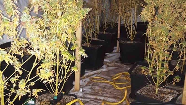 Εντοπίστηκε εργαστήριο υδροπονικής καλλιέργειας δενδρυλλίων κάνναβης στην Κυψέλη