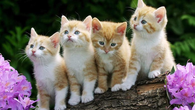 c7504bf1f4be Οι μικρότερες και ομορφότερες γάτες της Ευρώπης ταξιδεύουν στο Ζάγκρεμπ