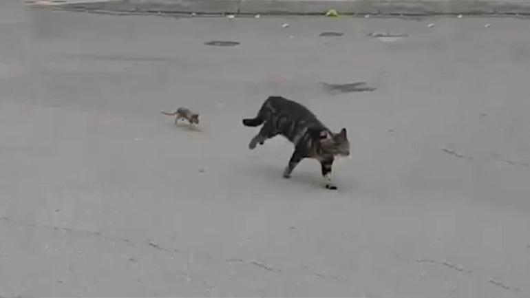 Η γάτα έγινε «λαγός»