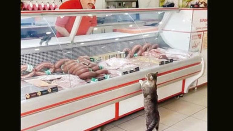 Τουρκία: Χασάπης κατασκεύασε τάφο για την καλύτερη πελάτισσά του τη γάτα Γεσίμ