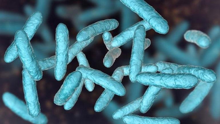 Ανακαλύφθηκαν στο ανθρώπινο έντερο σχεδόν 2.000 άγνωστα έως τώρα είδη βακτηρίων