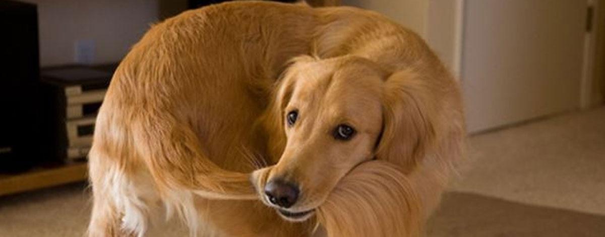 f04f83127db3 Γιατί να στειρώσεις τον σκύλο σου
