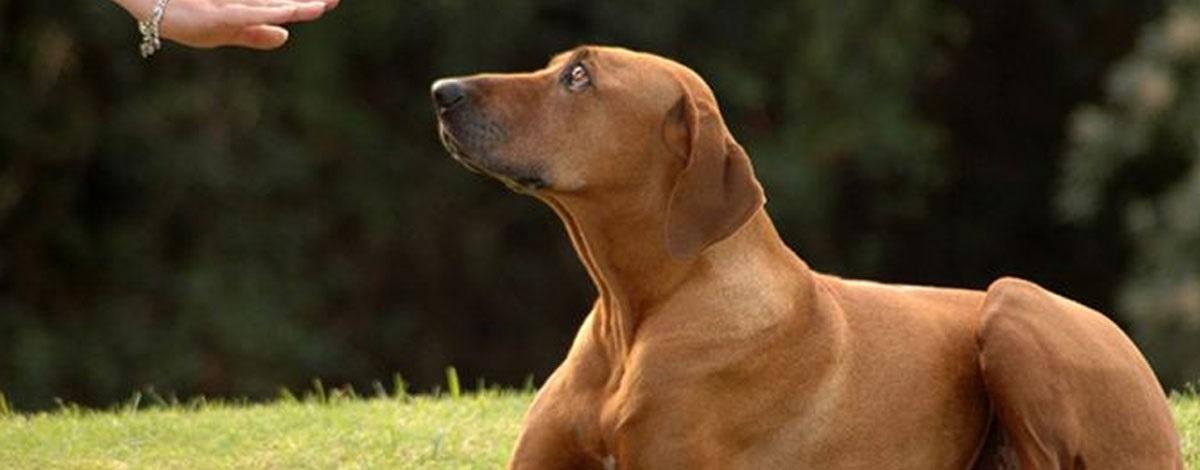 b03da8a427a Πόσα καταλαβαίνει ο σκύλος από εσάς;