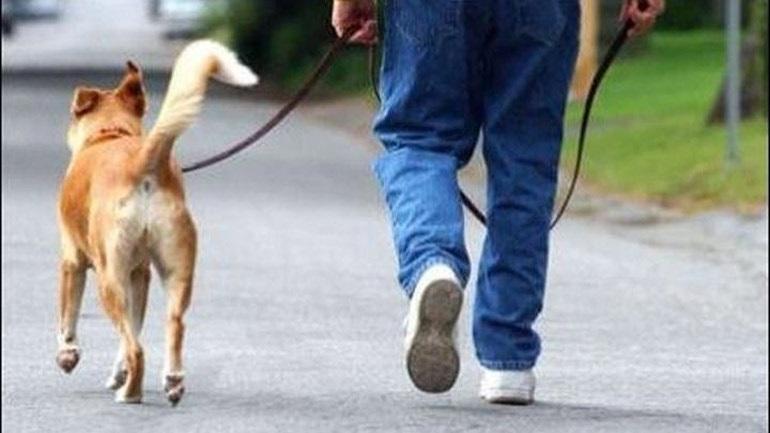 Αυστραλία: Πρόστιμο 2.400 ευρώ σε όσους δεν βγάζουν βόλτα τους σκύλους τους