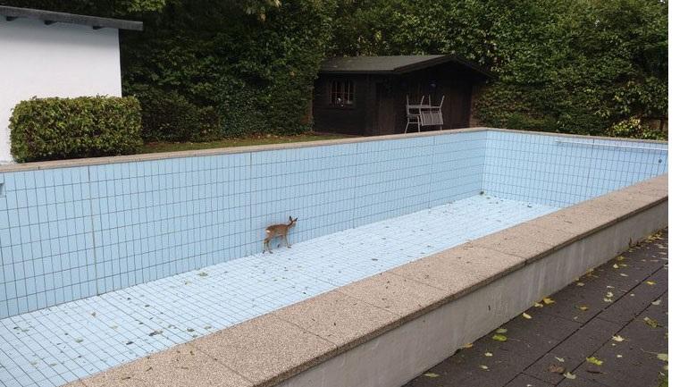 Γερμανία: Ελάφι απεγκλωβίστηκε από πισίνα με τη βοήθεια κυνηγού