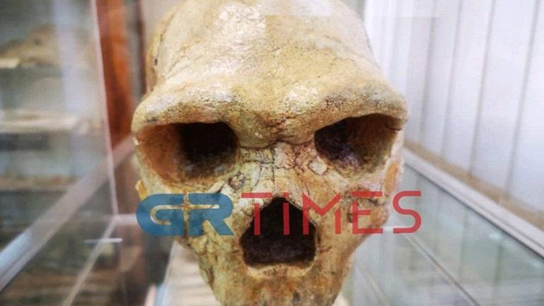 «Το πιο σπουδαίο εύρημα στην Ελλάδα»: Λύνεται σταδιακά το μυστήριο του Κρανίου των Πετραλώνων