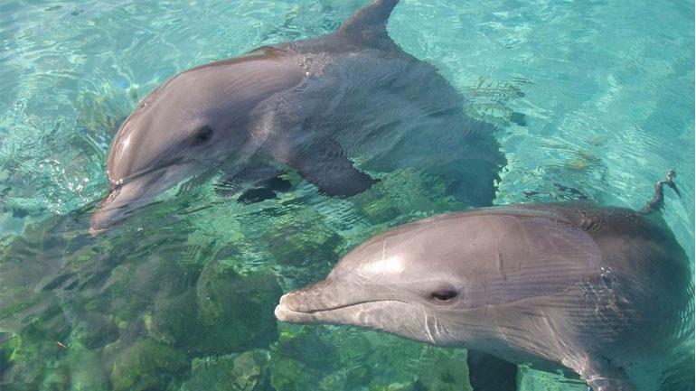 Δελφίνια έκαναν την εμφάνισή τους στον Θερμαϊκό
