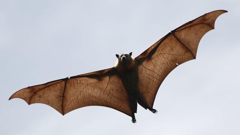 Ανακαλύφθηκαν έξι νέοι κορωνοϊοί σε νυχτερίδες - Υπάρχουν χιλιάδες άλλοι