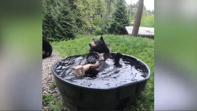 Αρκούδα διασκεδάζει απολαμβάνοντας το μπάνιο της σε ζωολογικό κήπο