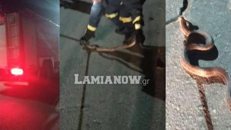 Ένα φίδι αναστάτωσε μια γειτονιά στην Ηράκλεια Φθιώτιδας!