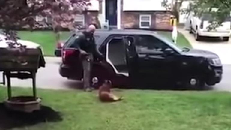 Αυτός ο αστυνομικός σκύλος Κ9 βαριόταν να πάει στην υπηρεσία - Πώς τον έπεισε ο συνάδελφός του