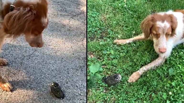 Η σκυλίτσα παίζει με τον νέο της φίλο